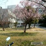 季節を感じるためのたった一本の桜