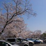 今年は桜が咲くのが早かった ~最近の生活の様子 その45~